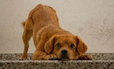 Formaldehyde in Pet Foods | Truth about Pet Food