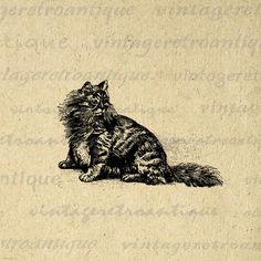 Digital Image Angora Cat Graphic Kitten Printable Download Antique Clip Art. High quality, high resolution digital graphic for iron on transfers, making prints, and more. Real vintage art. Antique artwork. This digital graphic is large and high quality, size 8½ x 11 inches. Transparent background version included with every graphic.