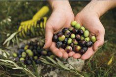 Extra Virgin Olive Oil | YUMBRIA! - THE VERY HEART OF ITALIAN TASTE  www.yumbria.com