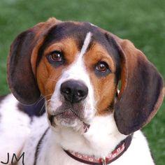 Quasimodo was adopted on 6/9/14!