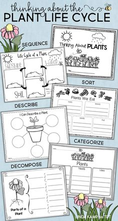 Add these fun graphic organizers to your plant life cycle activities to get your class thinking! Use them to have students sequence, sort, describe, categorize, and decompose the stages and parts of a plant. Part of a complete unit with lessons, science experiments, anchor charts and foldable flower booklet for 1st, 2nd, and 3rd grade.
