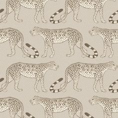 This eye-catching Leopard Walk Wallpaper is a simple yet striking design which forms part of Cole & Son's Ardmore Collection. It features leopards marching left and right across this wallpaper Wallpaper Online, Wallpaper Samples, Print Wallpaper, Wallpaper Roll, Bathroom Wallpaper, Designers Guild, Zulu Dance, Orange Tapete, Cole Son