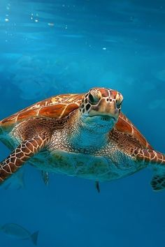Green turtle is swimming at andaman sea, Thailand. By Matcenbox Sea Turtle Pictures, Turtle Images, Animals Beautiful, Cute Animals, Cute Turtles, Sea Turtles, Pics Of Turtles, Loggerhead Turtle, Turtle Swimming
