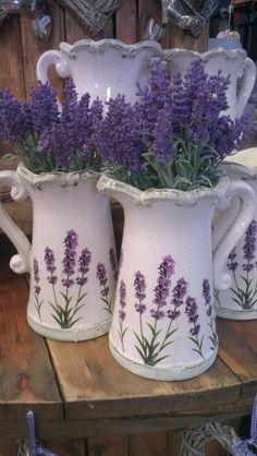 Jugs of Fragrant Lavender