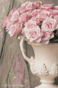 French Country Shabby Chic pink Roses in Elegant White Urn