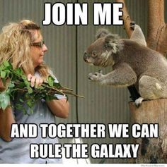 Join me and together we can rule the galaxy #StarWars #koala