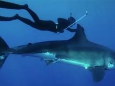 Woman freediver rides a great white shark off Mexico
