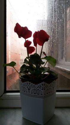 Yağmuru izlemek  penceremden......  .