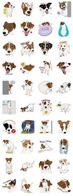 Funny Jack Russell Terrier