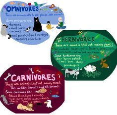 C2W2: Three Types of Consumers, Herbivore, Carnivore, and Omnivore - Kids A - Teacher Jocelyn
