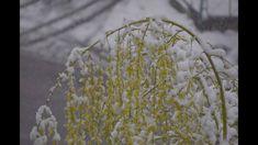 Iarna din martie Martie, Make It Yourself, Folklore
