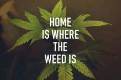 Home is where the weed is:-)