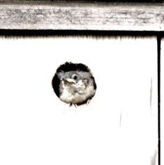 Baby wren ,,,  By Tina Garrison