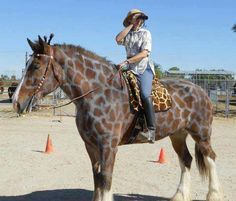 Are Giraffes Similar To Horses - Horse As Giraffe Pictures Majestic Horse, Beautiful Horses, Pretty Horses, My Horse, Horse Love, Horse Camp, Horse Fancy Dress Costume, Horse Halloween Costumes, Animal Costumes