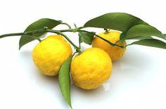 日本ではお馴染みの柚子。薬味、ジャム、ハチミツ漬けなど色々な使い道があり、果汁だけではなく、皮や種まで効能に溢れた優れた柑橘類ですよね。でも身体に良いとは知ってはいても、あまりに身近過ぎて、効能はよく知らないなんて方も多いかもしれません。