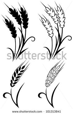 Wheat and rye - stock vector