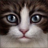 Brown tabby and white cat face