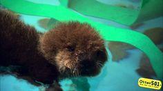 Meet Otter 501