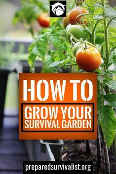 survival garden - seven survival garden tips