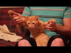 ▶ CAT DUBSTEP | Funny Animal Vine Videos - YouTube