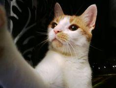 My Cat :)   #cat  #selfie #cute