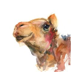 Buy Camel Portrait, Watercolor by Sophie Rodionov on Artfinder. Discover thousands of other original paintings, prints, sculptures and photography from independent artists.