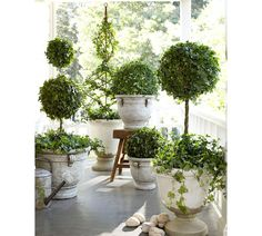 bring Spring to your porch with topiaries... that's where hedera helix belongs--in a pot! Love this