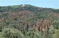 The climate change could produce unexpected effects on the American forests