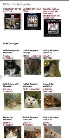 SUPER URGENT 9 BEAUTIFUL LIVES TO BE DESTROYED 03/17/16 -STARTING AT 12 NOON  PLEASE SAVE US WE ONLY HAVE A FEW MORE HOURS BEFORE WE GO TO CAT HEAVEN THANK YOU    - Please share their story and be their voice.This is a VERY HIGH KILL facility so time is critical. You may be their only voice, so time is CRITICAL. YOU may be their ONLY hope. Please Share! - --Please Share: -