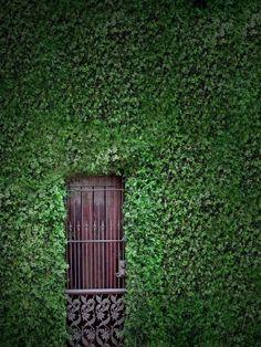 justcallmegrace:  secret garden revealed