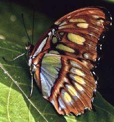 Butterflies - beautiful