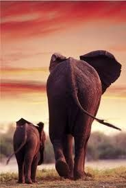 elephant sunset - Google Search