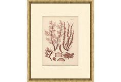 Antique Seaweed Print, 1871