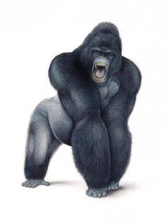 New Gorilla Drawing - WIP [Archive] - WetCanvas