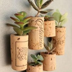 How to make wine cork magnet planters with succulents, magnets, wine corks. Full tutorial with pictures on how to make wine cork magnet planters for fridge. Air Plants, Indoor Plants, Indoor Gardening, Small Plants, Green Plants, Organic Gardening, Gardening Tips, Urban Gardening, Vegetable Gardening