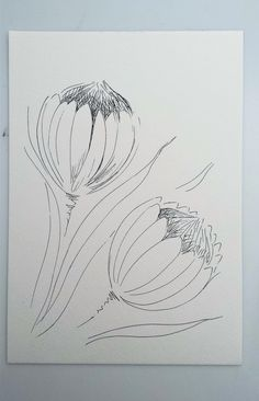 A drawing study of 2 Proteas Simple Flower Drawing, Flower Art Drawing, Flower Sketches, Floral Drawing, Flor Protea, Protea Art, Protea Flower, Abstract Drawings, Art Drawings Sketches