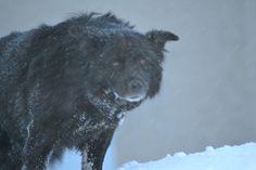 Blacky The Wild Dog from HotelPordoi