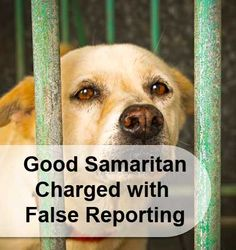 Good Samaritan Charged with False Reporting after she rescued a dog out in the cold. Learn more about how easily it is to be charged with a crime, and what you can do to protect yourself!
