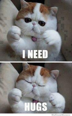 Cat Needs Hugs « Meme « Meme Collection