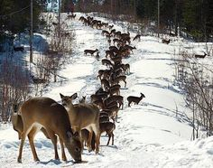 I love this picture of the deer on the mountain side in the snow.  Beautiful animals and great to share at this time of year. CLICK ON PIN AND LEARN HOW TO MAP PINS WITH YOUR ANIMAL BUSINESS