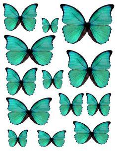 #buterflies