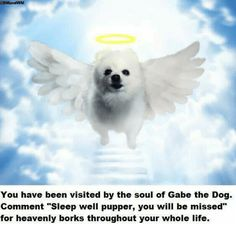 You Have Been Visited by the Soul of Gabe the Dog Comment Sleep Well Pupper You Will Be Missed for Heavenly Borks Throughout Your Whole Life Sleep Well Pupper You Will Be Missed Gabe The Dog, Cute Puppy Pictures, Sleep Tight, Cute Puppies, Wellness, Lol, Memes, Animals, Random Stuff