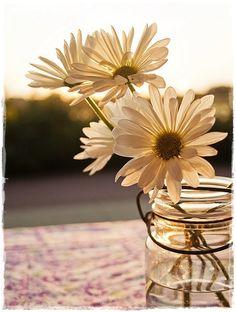 belas flores da manhã...