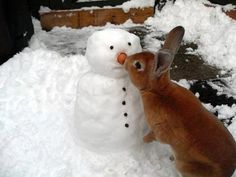 Rabbit got your nose!