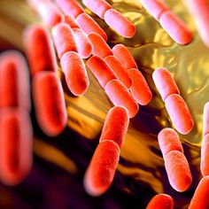 Gut Bacteria Benefits: Could Better Bacteria Actually Cure Your Condition?