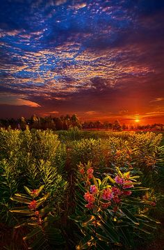 Heaven on Earth by Phil Koch on 500px