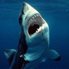 The Scariest Animals in the Worldthey are scary