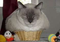 Time for a nap in the cheese basket