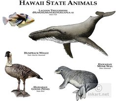 Fine art illustration of the official animals of the state of Hawaii Rare Animals, Animals And Pets, Hawaiian Monk Seal, Animal Plates, Animal Species, Mundo Animal, Animals Of The World, Arizona, Animal Drawings
