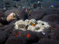 Taken during a scuba dive in Uss Liberty Wreck, Indonesia by Nicolas